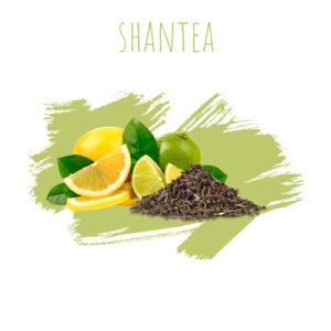 תערובת תה DALY Shantea